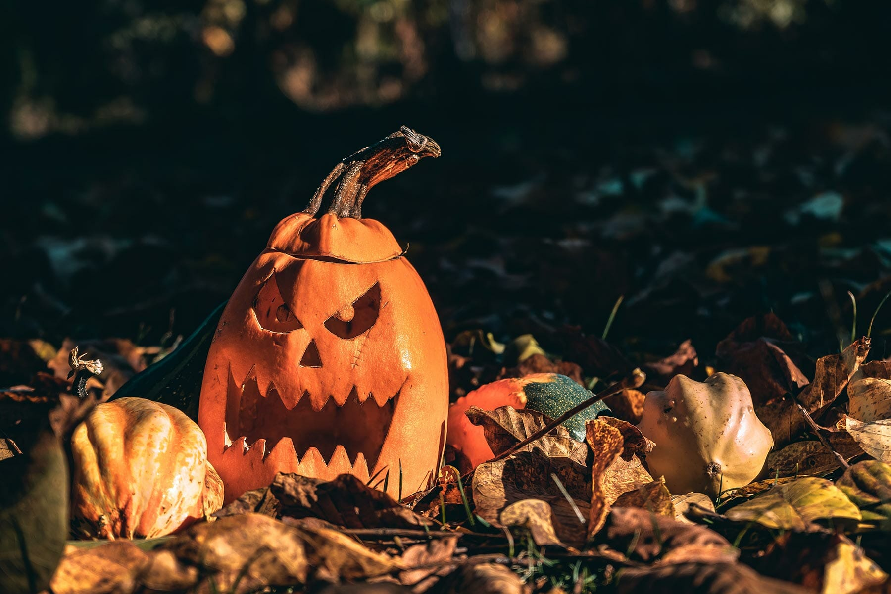Jack-o-lantern on the ground with leaves